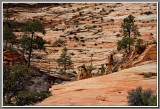 Slick Rock Hike, Zion High Country
