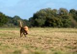 16th October 2012 - dog