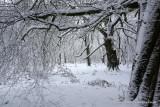 23rd Jan 2013 - Snow :)