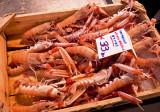 P4010029_shrimp2_8.jpg