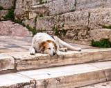 P4020076_sleepingdog_8.jpg