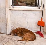 P4020115_dogatstore_8.jpg
