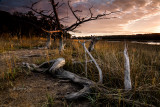 Salt Marsh Fallen 3