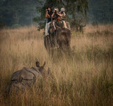Safari in Chitwan NP