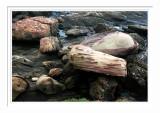 Nanya Big Fish Stone 南雅奇石