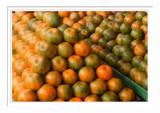 Mandarins - Taitung