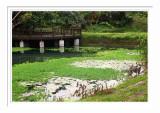 Mataian Wetland 3 花蓮馬太鞍濕地