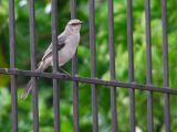 In the fence / En la cerca