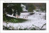 Moutons sous la neige Wismes 2012