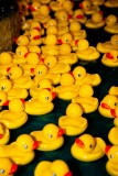 Rubber Ducky Regatta