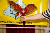 Check out my wingspan