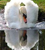 BIRD REFLECTIONS.
