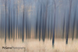 Abstract Larches