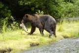 Fish Creek: bear