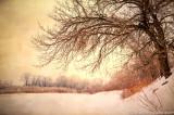 Winter trees, Minnesota river