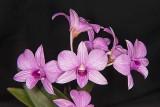 Den. hawaiian mini stripe
