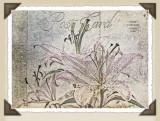 lily postcard...