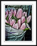 tulips for sale...