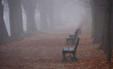 Autumn sceneries 2012 ll - in the fog