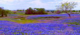 Bluebonnet Farm II