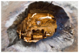 Peephole into a fairy house