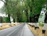 315 road near Marvao.JPG