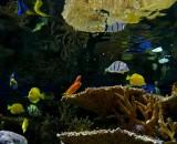 365 NE Aquarium 2.jpg