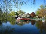 426 Boston Pubic Garden.jpg