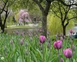 438 garden.jpg