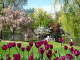 442 Boston Pubic Garden.jpg