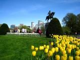 447 Boston Pubic Garden.jpg