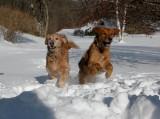274 Snow dogs.JPG