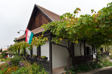 House In Vine And Flowers