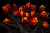 Tis The Season For Tulips