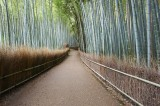 Bamboo forest in Sagano Kyoto @f8 D700