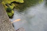 A pond @f4 D700
