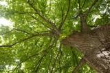 A big tree @f16 D700