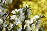 Flower called boke @f8 D800E