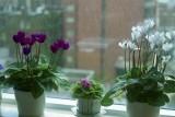 Flower pots Reala