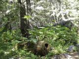 Walk of the Cedars