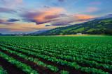 Salinas Valley California