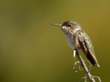 Vogels Latijns Amerika - Birds Latin America