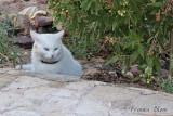Eén van de verwende katten van de eigenaar van het hotel