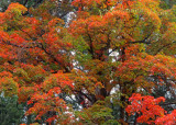 The tree_0804