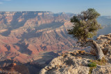 Lipan Point Grand Canyon.jpg