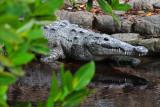 Everglades, Dec 2012