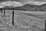 Bonnie RS cades cove field.jpg