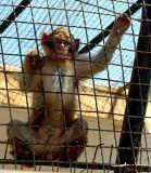 Algérie - Alger - Zoo de Ben Aknoun