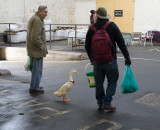 Man and Duck
