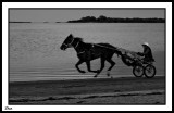 Gallop Exercise at Dawn.